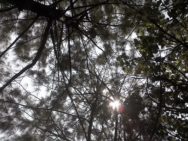 Tembusan cahaya matahari: Tidak sengaja memotret ini, hasilnya ternyata bagus.
