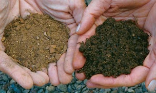 Garden Soil vs top soil