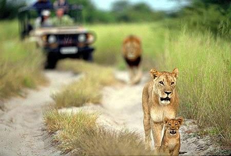 Top 5 mejores Safaris del Mundo