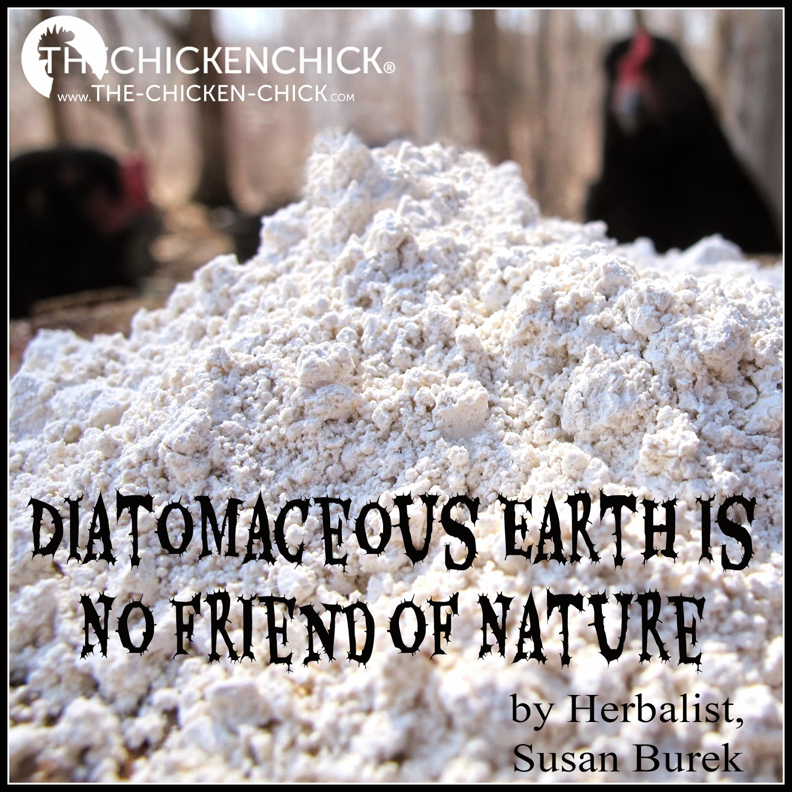 the chicken raising chickens naturally diatomaceous earth