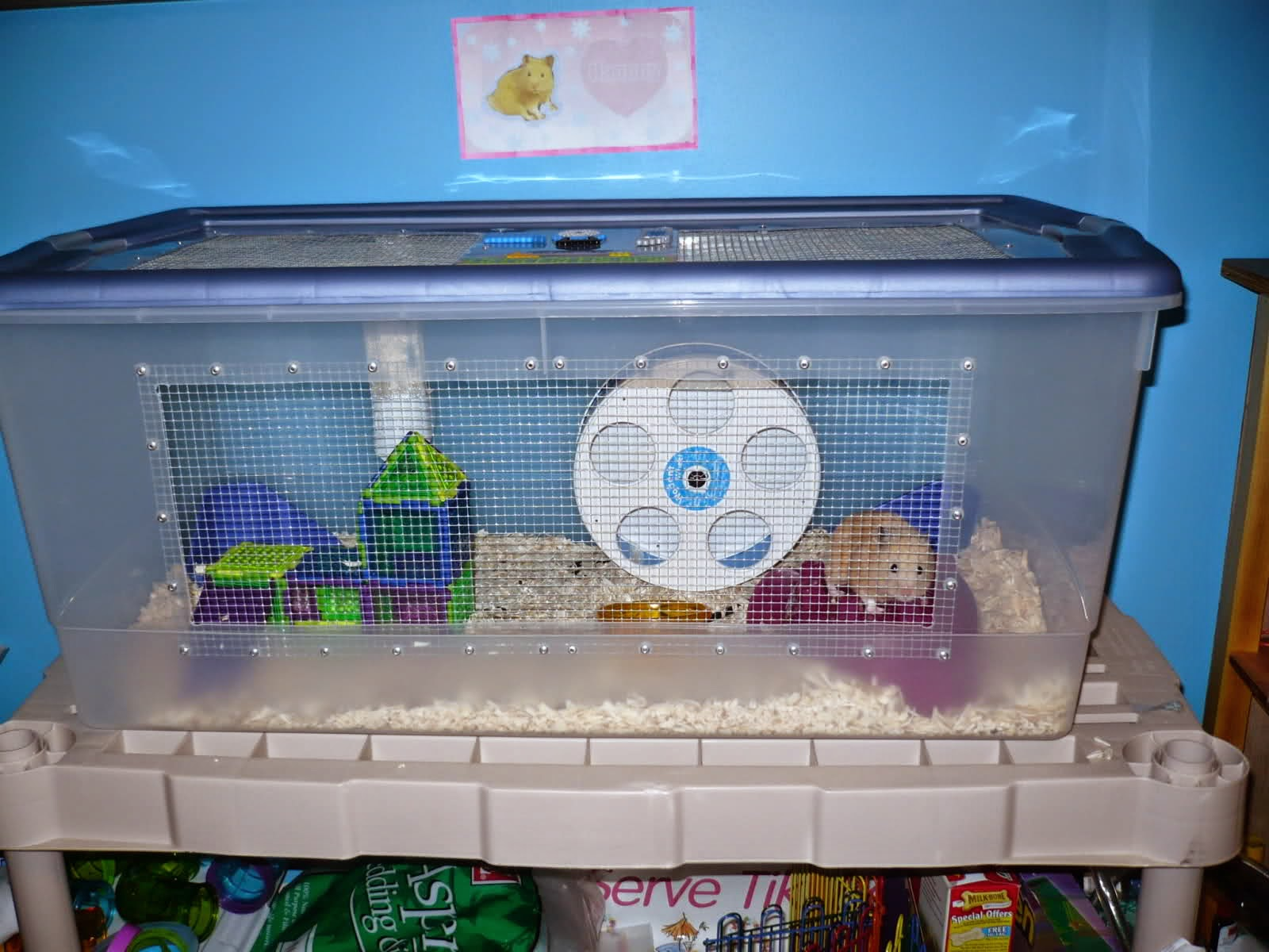 Syrian hamster cages diy for How to make a diy hamster cage