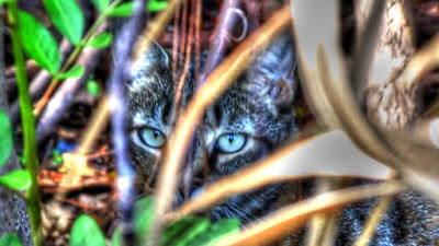 Feral Jungle Cat