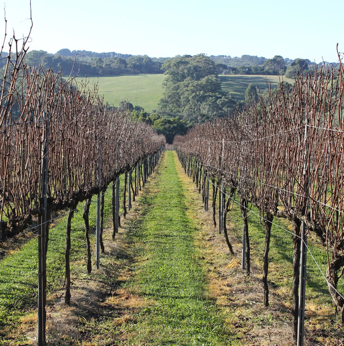 Backyard Vineyard Design :  Being a Tourist in my own Backyard on the Mornington Peninsula
