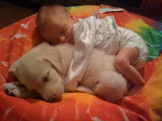 Bebé abraçado a cão
