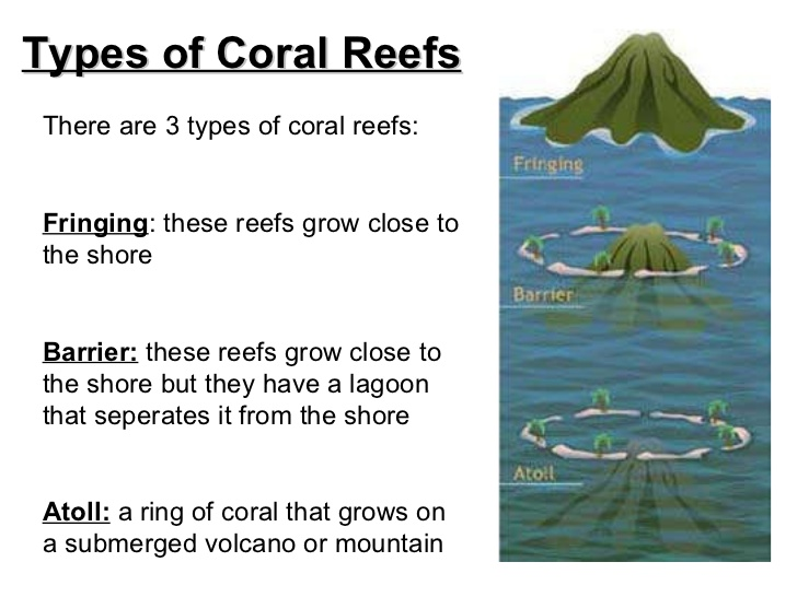 Destruction of wetlands coral reefs and sea grass beds for coastal seagrass beds publicscrutiny Images