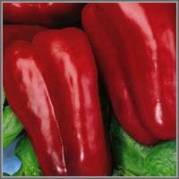 Сладкий перец сорт «Юбилейный Семко»