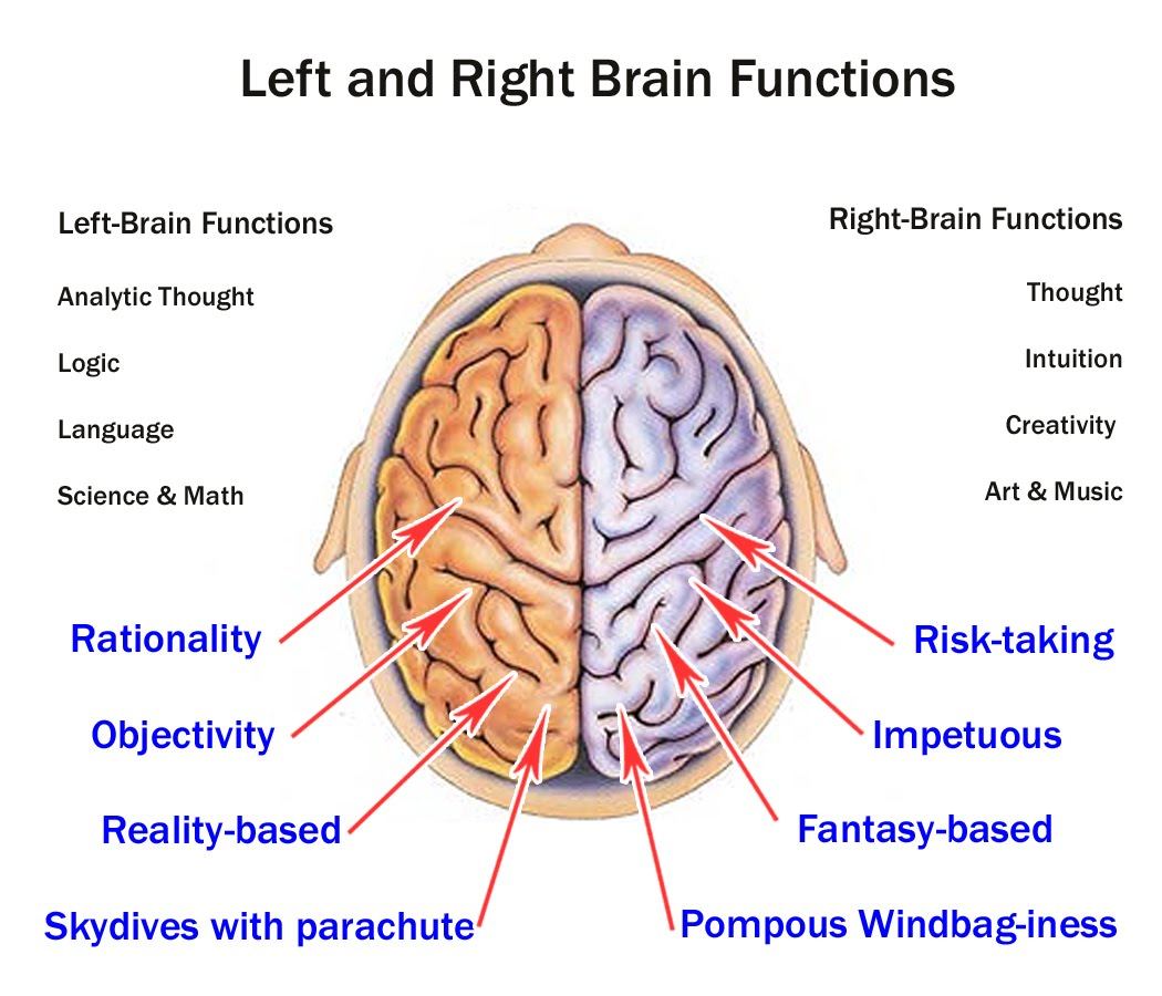 localized function of human brain