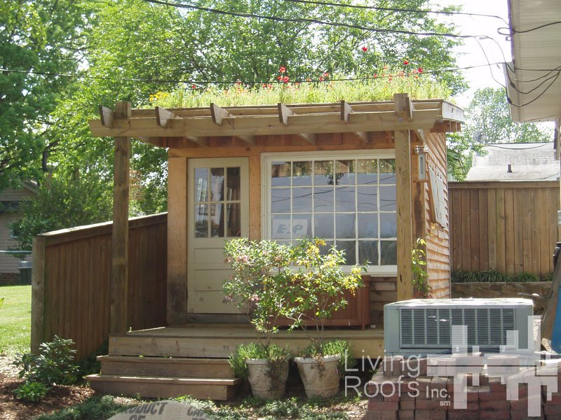 Kevin songer small residential green roofs for fun food for Livable shed plans