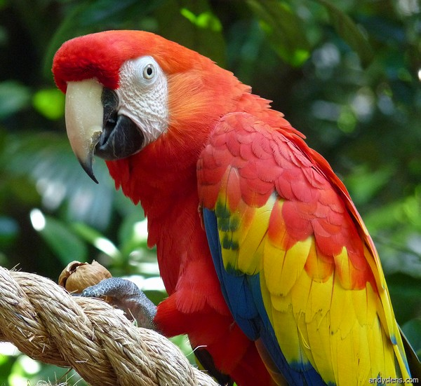 information about parrot bird Posts tagged bird information in marathi  july 2018 -  parrot information in marathi, my favourite bird parrot essay july 2018 - marathitv editorial team.