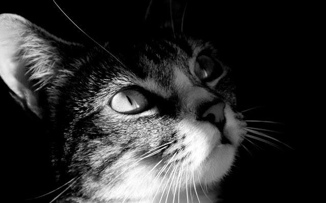 hình nền mèo con dễ thương 2015