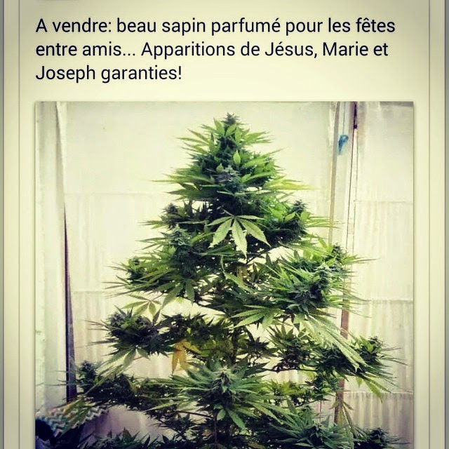 Citations option bonheur sapin de no l humoristique - Sapin de noel humour ...