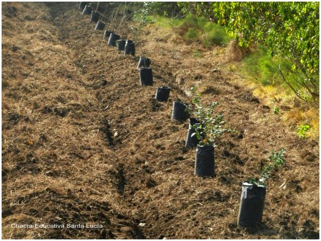 Plantando una cortina cortavientos de árboles nativos - Chacra Educativa Santa Lucía