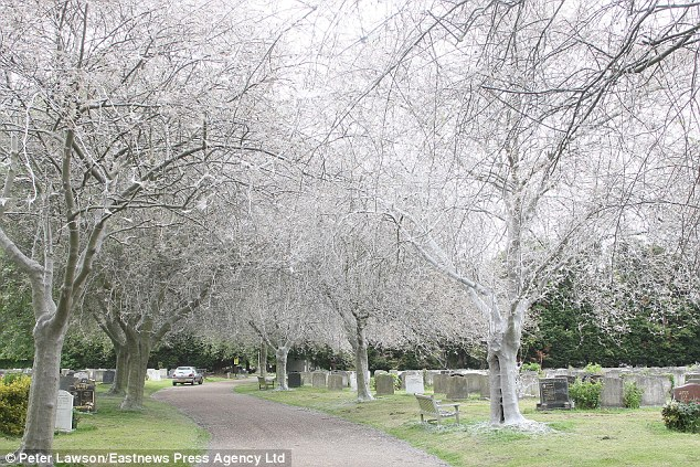 Spooky Caterpillar Invasion Leaves Graveyard Looking Like A 'Scene From A Horror Movie'