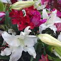 花,開店祝い,スタンド花,花輪〈著作権フリー無料画像〉Free Stock Photos