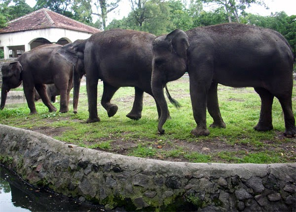 Wisata Jogja : Kebun Binatang Gembira Loka