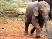 "Activism: petition targets Chinese officials regarding African poaching ""due to the demand of ivory"