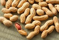 klasifikasi kacang tanah