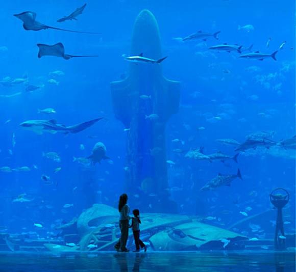 هل تخيلت أن تعيش تحت الماء ؟ فندق أتلانتس دبي underwater-hotel-dub