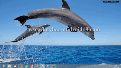 THEME WINDOWS 8 DOLPHINS