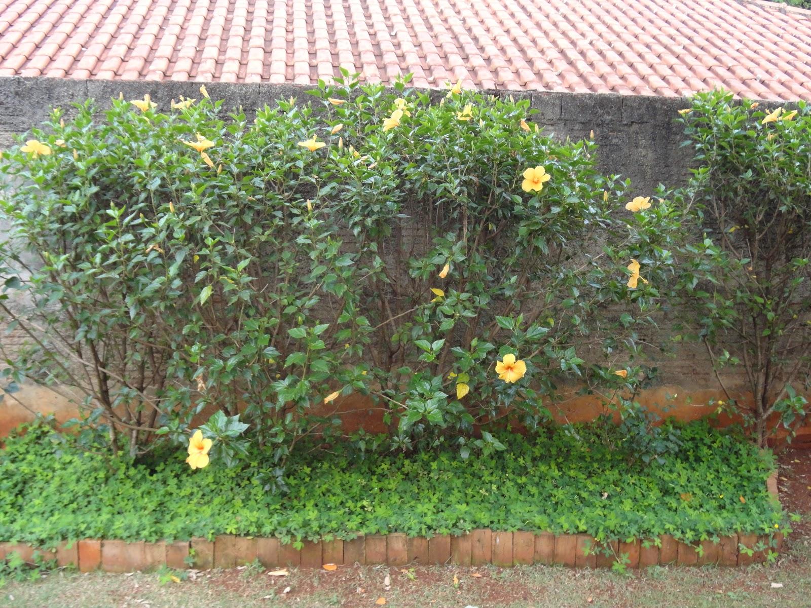 CULTIVO A VIDA Plantas do Meu Jardim