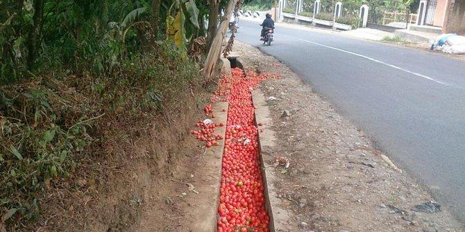 banjir tomat di selokan