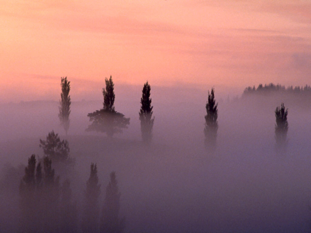 Inside the Bipolar Mind: The Mist