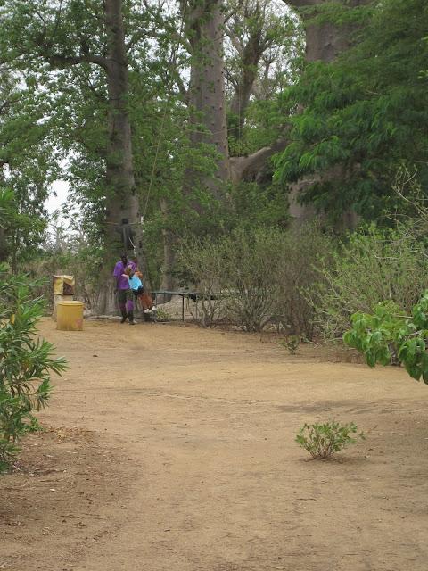IMG_3331 ▷ La Reserva de Bandia y Accro Baobab Adventures