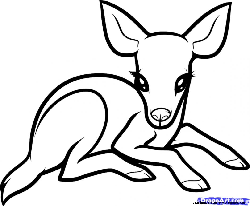 dragoart animals coloring pages - photo#5