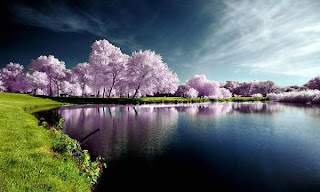 beautiful nature pictures wallpaper 11 >Foto Pemandangan yang menyejukkan Mata
