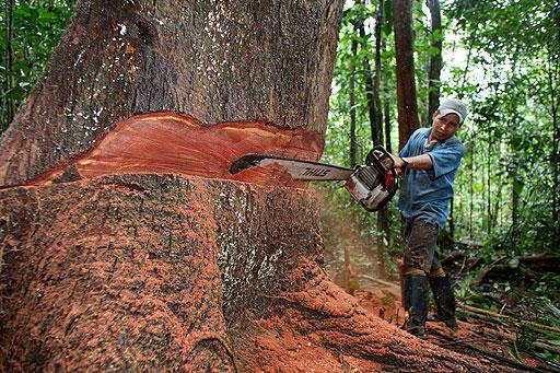 Aspectos del medioambiente cu ntos rboles destruimos for Cuanto mide un arbol