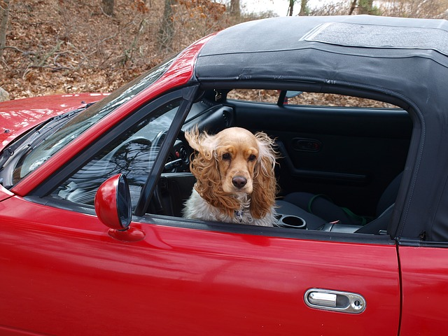 Bien voyager en voiture avec son chien