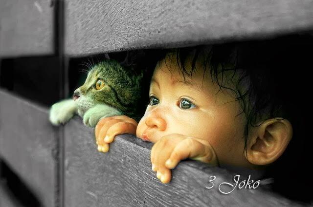 niño y su gato mirando detrás de una valla