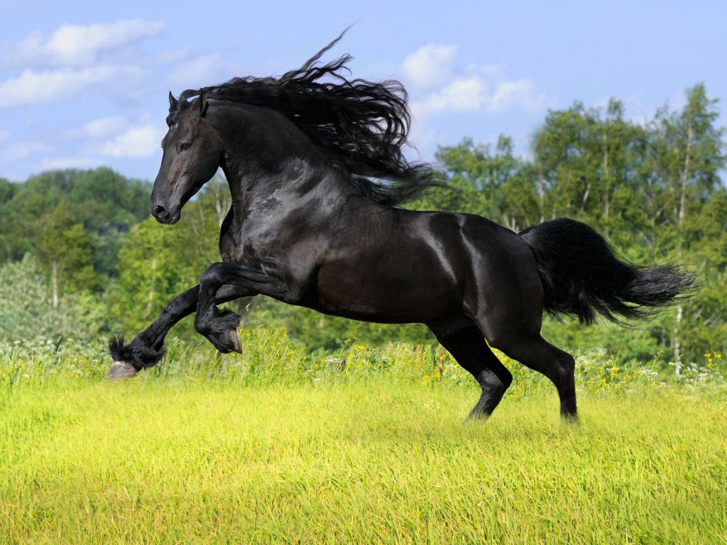 12 black horse wallpapers black horses beautiful wallpapers
