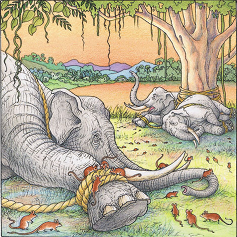 the development of the story the mice that set the elephants free 2018-06-07 the mice and the elephants - panchatantra story once upon a time,  the rats quickly started biting the ropes and soon the elephants were set free the elephants thanked the.