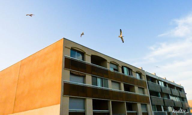 Ça titille les papilles !, Mouette, Architecture, Hotel, Plage, Carnon