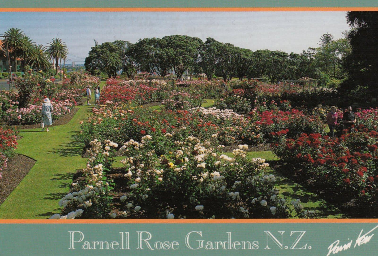 Amanda from Seattle: Wild Card: New Zealand Rose Gardens