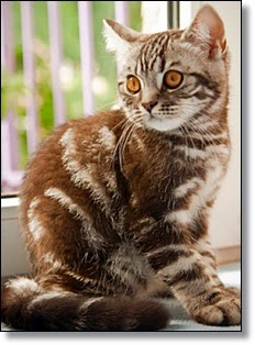 Picture of tabby cat
