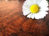 """""""Flor em estúdio"""""""