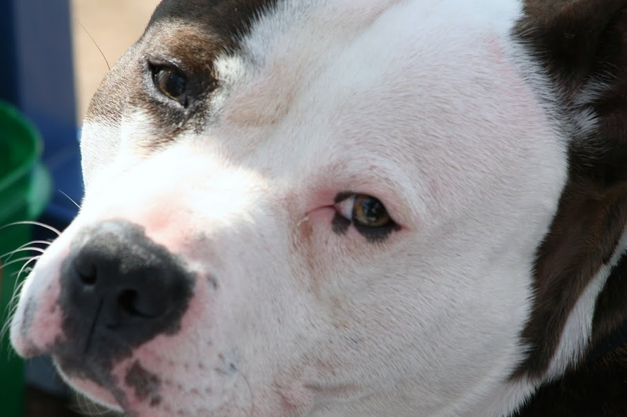 Dog Food Help Itchy Skin