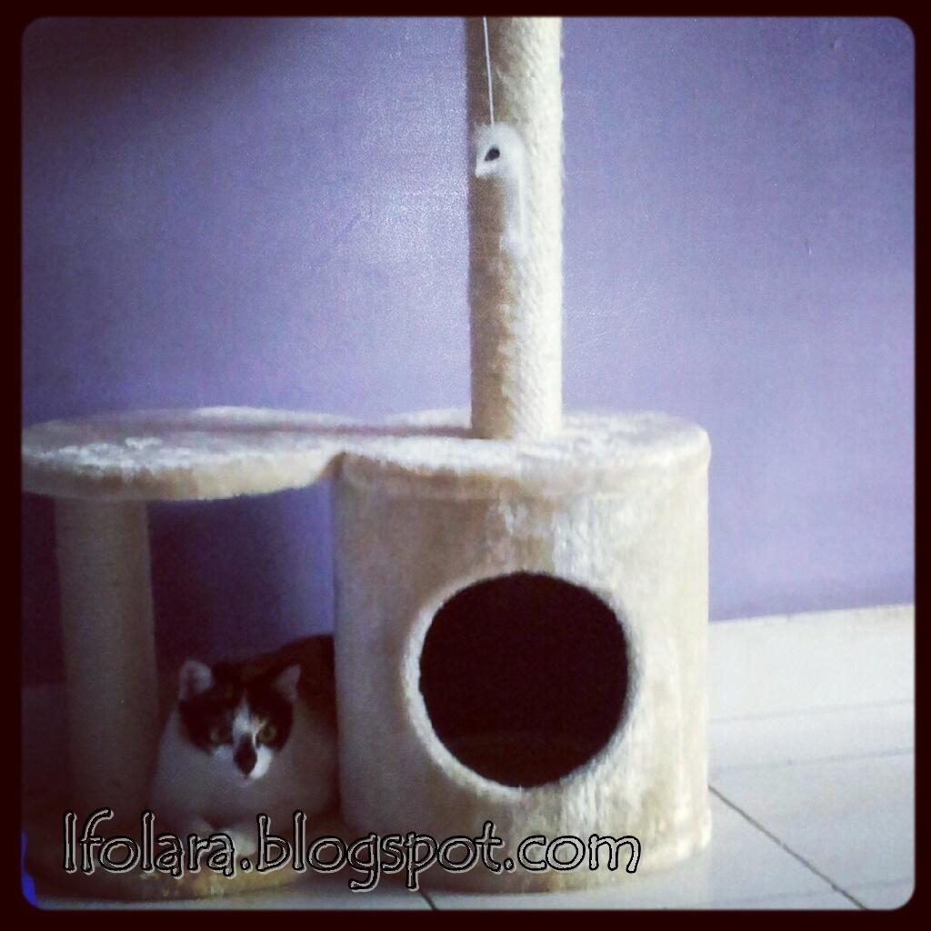 cat tree amp pangai diva memei aku kucing dia dan kamu