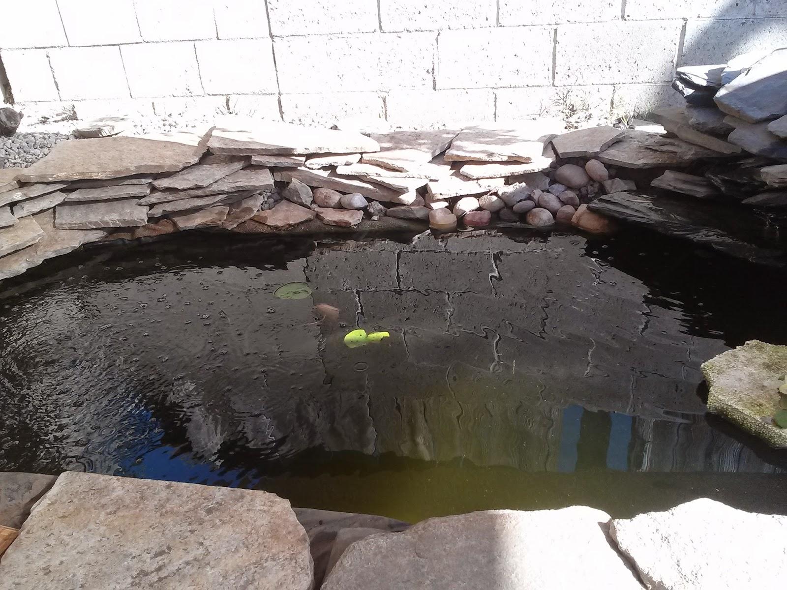 backyard aquaponics u2022 view topic mike u0027s system