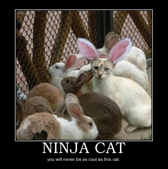 Funny Picture Clip Top 25 Funny Demotivational Posters