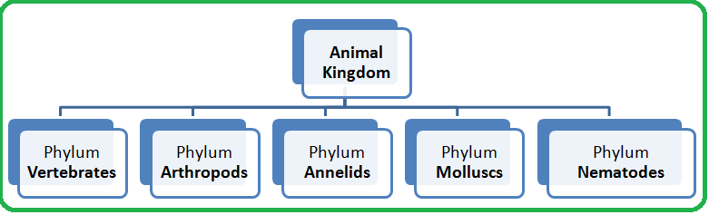 biology phylum notes Study notes on invertebrates phyla this means that in each phylum  our mission is to provide an online platform to help students to share notes in biology.