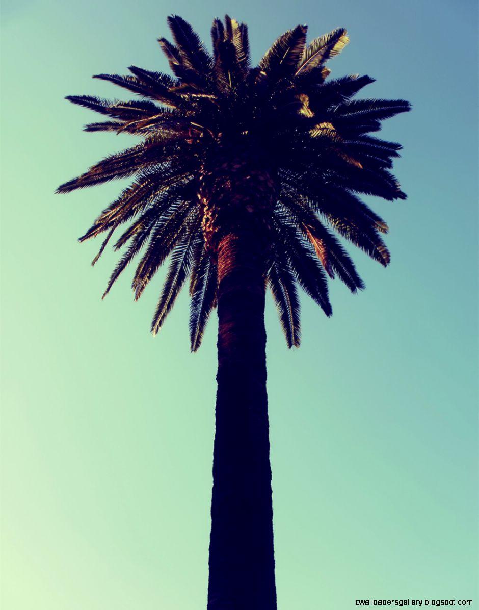 RAWZ — Young Palm Tree