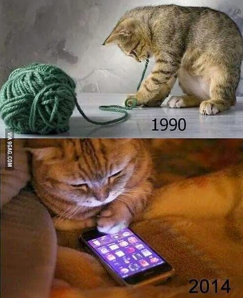 evolucao gatos 1990 2014