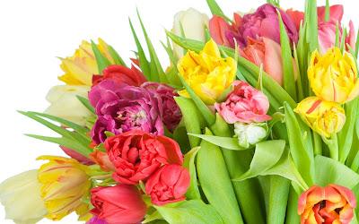 33 fotos de tulipanes de colores para el Día de las Madres