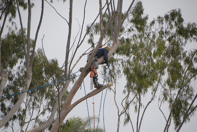 workers finished job task of tree felling