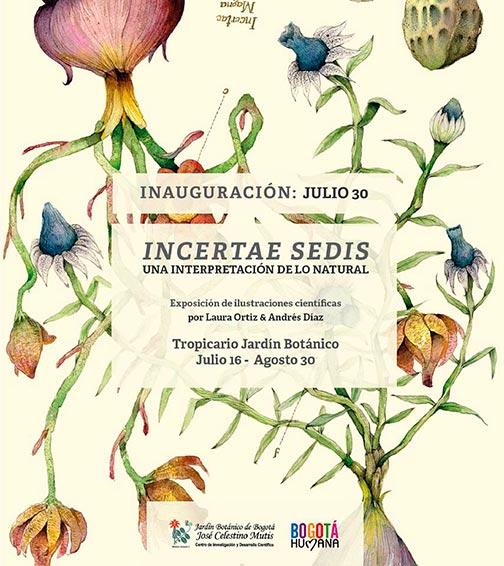 Exposición de Ilustración. INCERTAE  SEDIS – Una interpretación desde lo natural