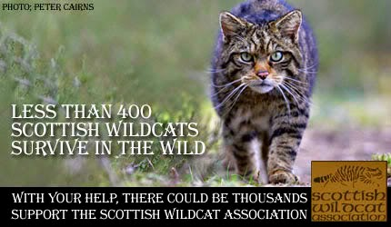 Save the wildcat!