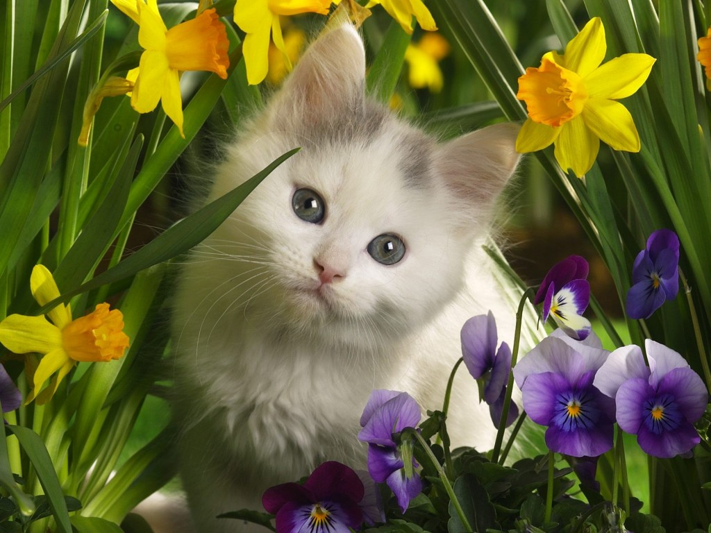 Wallpaper Gallery: Cat & Kittens Wallpaper -